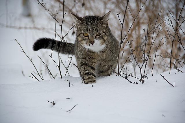 kat ude i sneen